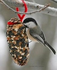You can use pine cones to create your suet treat for the birds